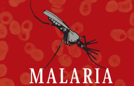 11 remedios caseros naturales para la malaria