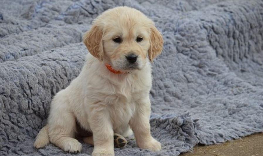 Soñar con un perro - ¿Qué significa?
