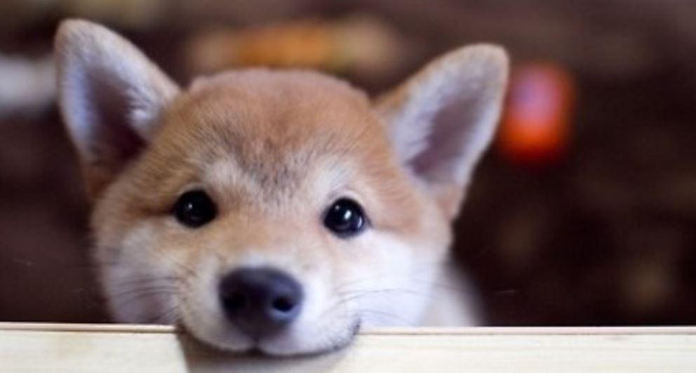Mordedura de perro: Significado e interpretación de los sueños