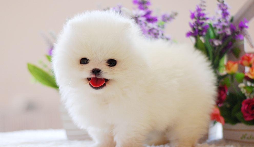 Soñar con perro blanco: Significado, Interpretación