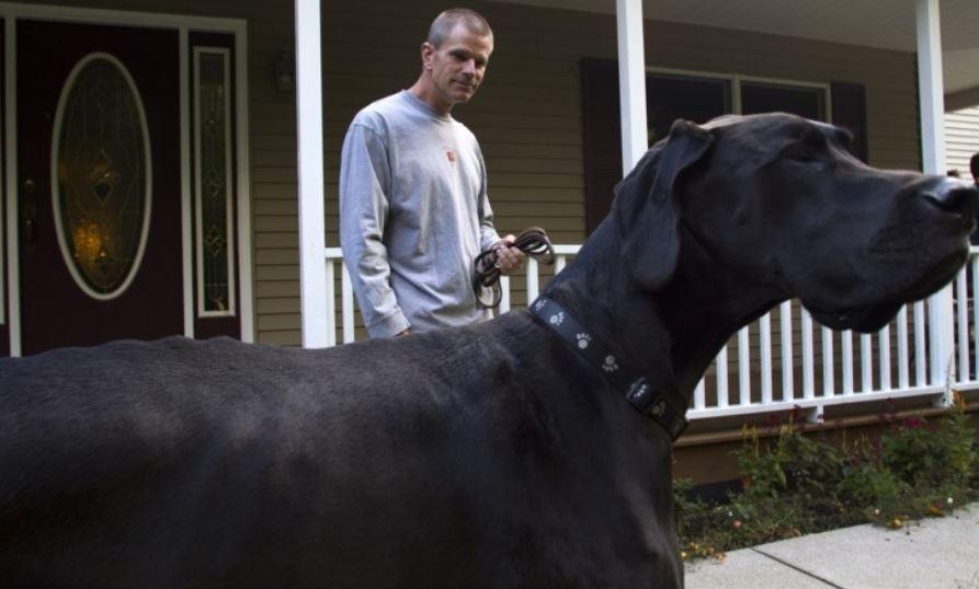 Perro negro: Significado de los sueños, interpretación, símbolos