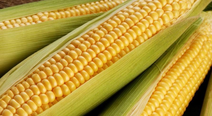 Soñar con maiz: Significado e interpretación del sueño