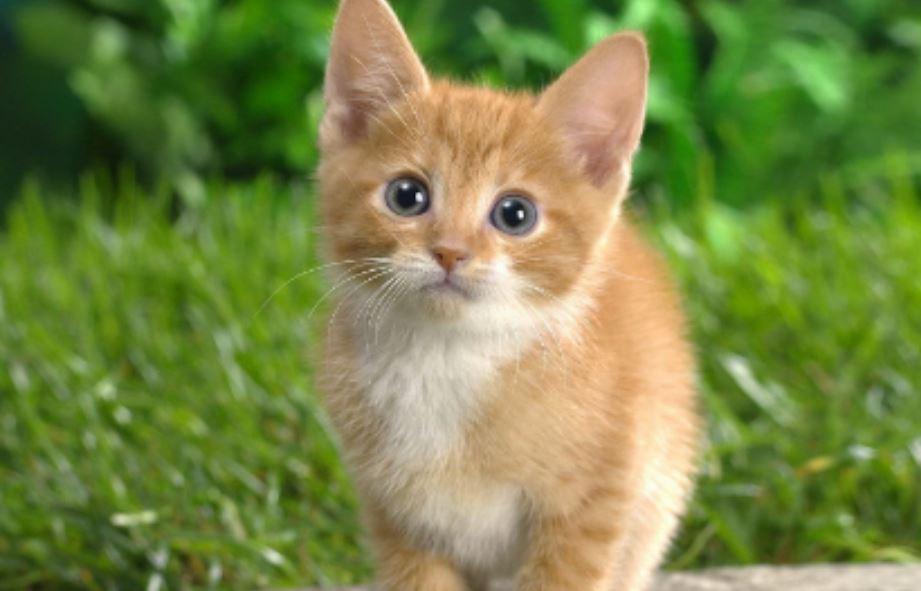 Soñar con gatos: Significado e interpretación del sueño