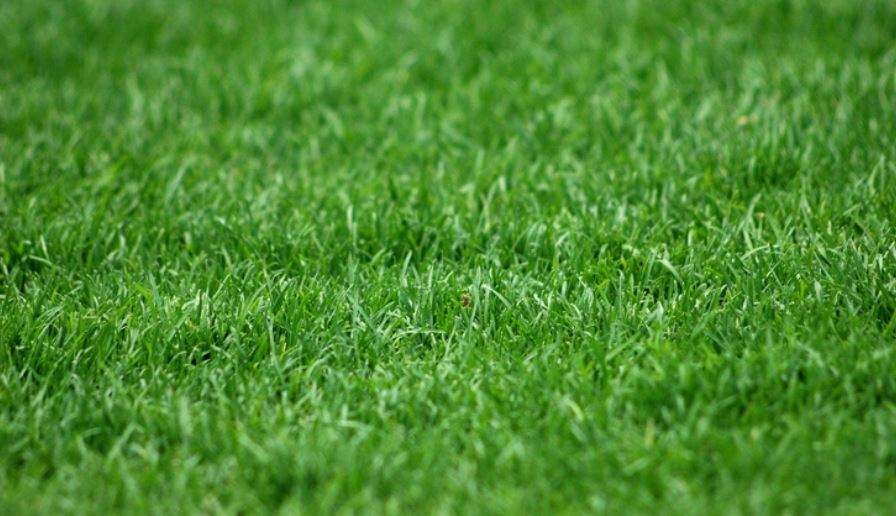Soñar con hierbas: Significado e interpretación del sueño