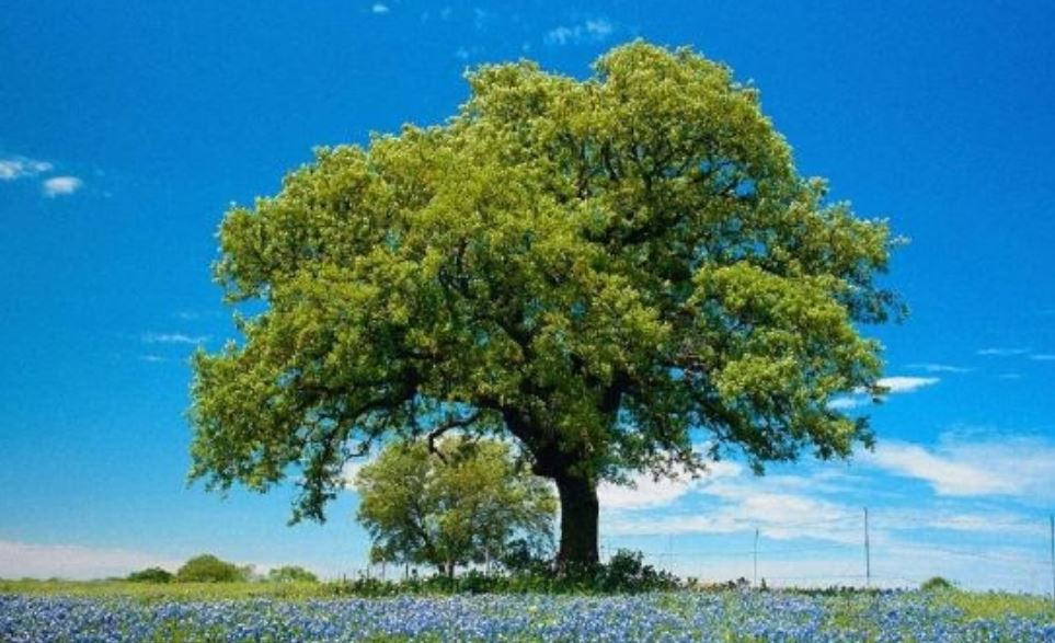Soñar con arboles: Significado e interpretación del sueño