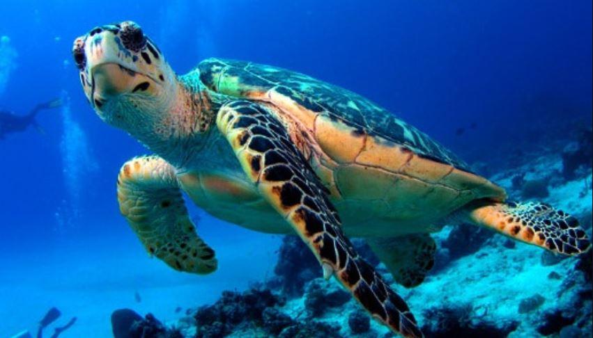 Soñar con tortugas: Significado e interpretación del sueño