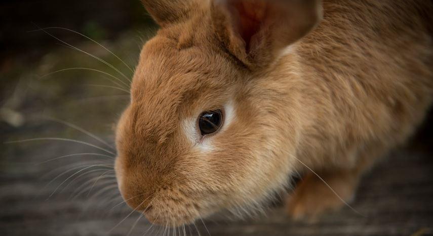 Soñar con conejos: Significado e interpretación del sueño