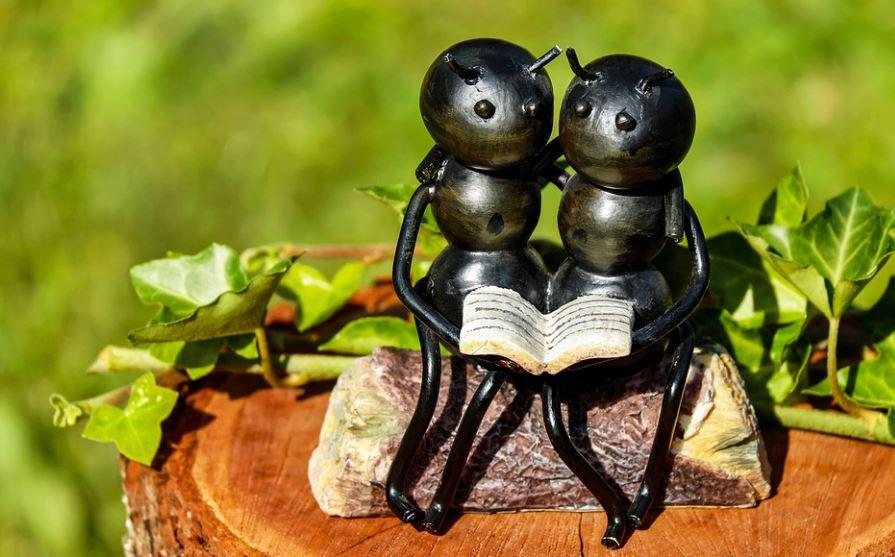 Soñar con hormigas: Significado e interpretación del sueño