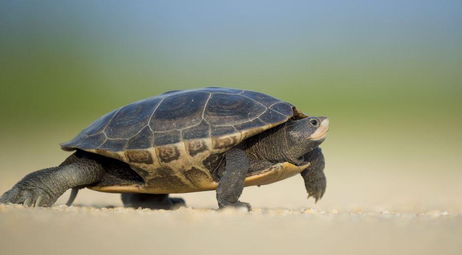 Qué Significa Soñar Con Tortugas? - Significado e interpretación del sueño