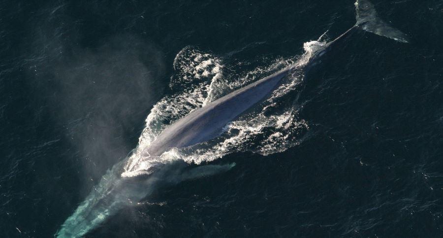 Soñar con ballenas: Significado e interpretación del sueño