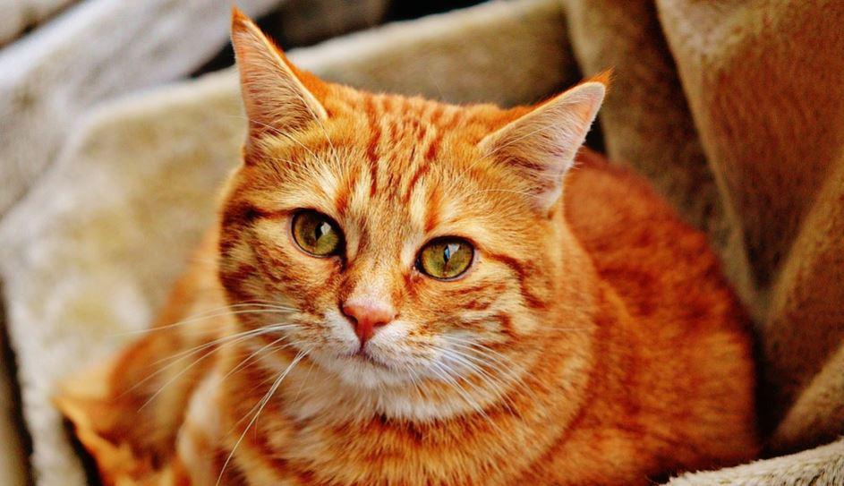 ¿Qué Significa Soñar Con Gatos? Significado e interpretación del sueño