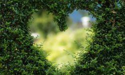 Tauro en el amor: Significado de los Signos Zodiacales