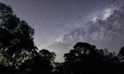 1 de mayo signo: Horóscopo y signos del zodiaco