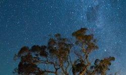 24 de julio signo: Horóscopo y signos del zodiaco