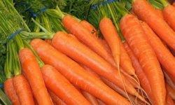 Zanahoria: 17 propiedades y beneficios para la salud