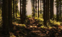 Soñar con bosque: Significado de los sueños