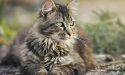Soñar con gatos: Significado de los sueños