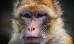 Soñar con monos: Significado de los sueños