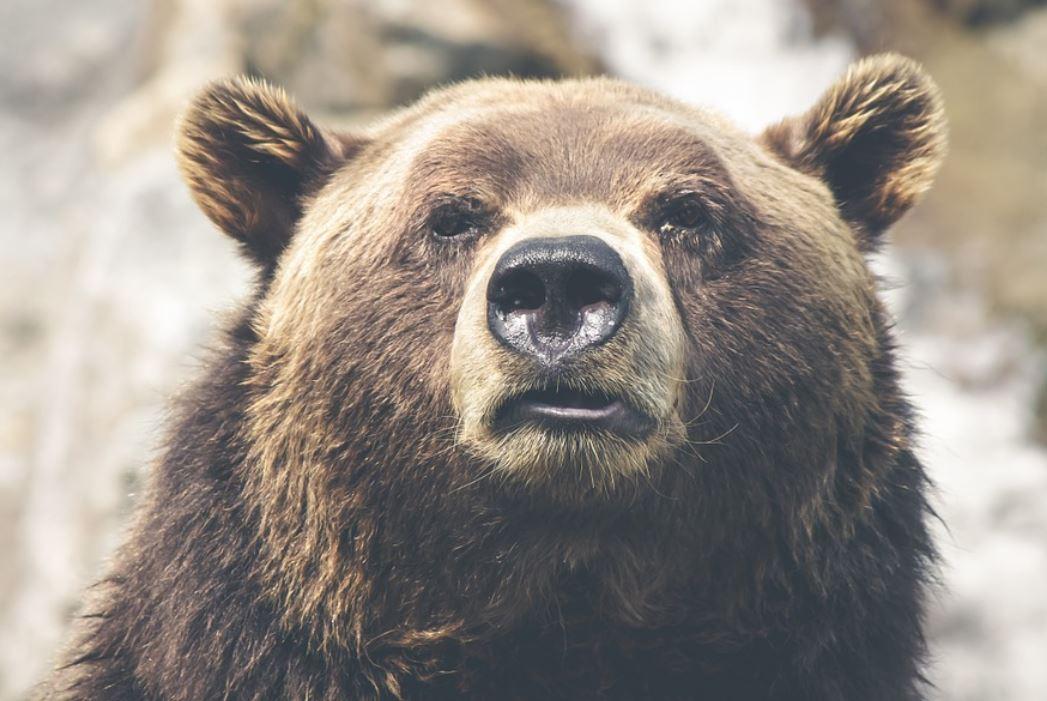 Soñar con osos