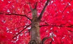 Soñar con color rojo: Significado de los sueños