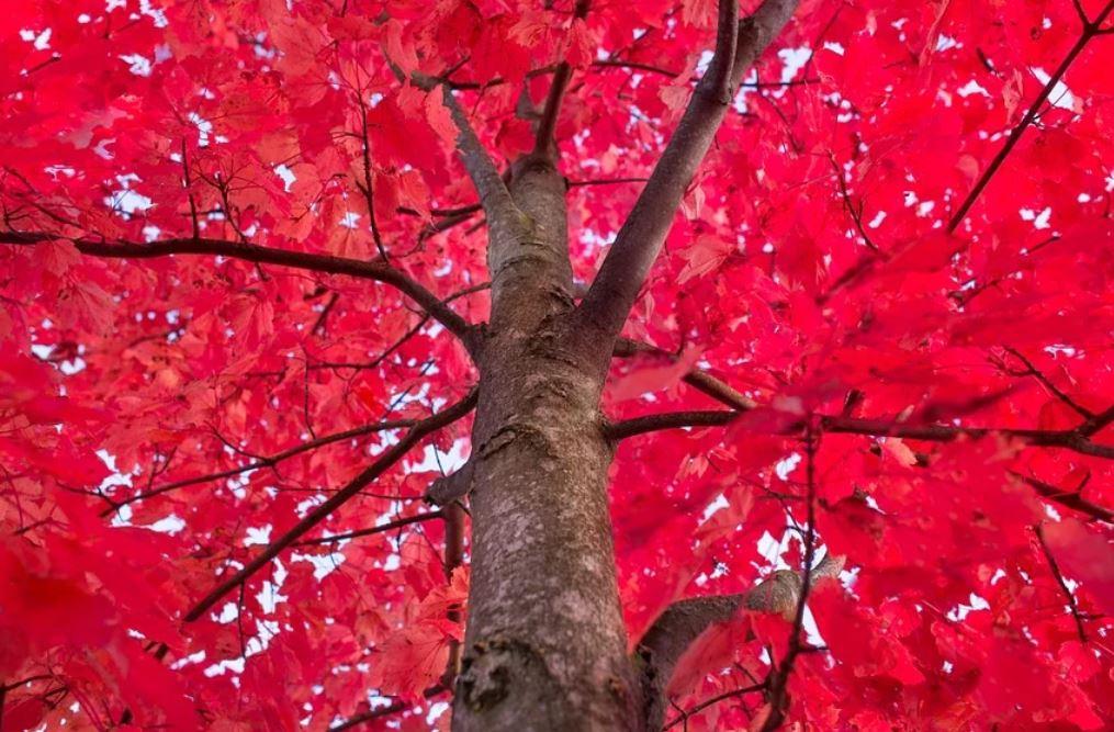 Soñar con color rojo